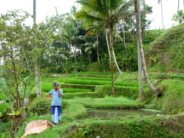 Rice fields – and cell phones, too – at the sacred temple of Gunung Kawi